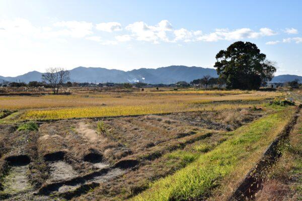 田舎の土地を運用するなら?土地活用の注意点とおすすめ活用方法