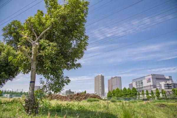 土地への投資で収益を得るには?更地・空き地の有効活用方法